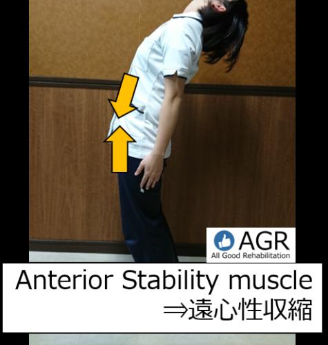 体幹伸展と遠心性収縮